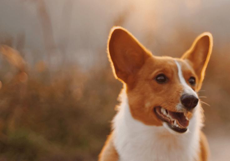 לכשכש בכלב - טיפול בעזרת כלבים בבתי דיור מוגן
